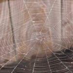 蜘蛛の巣を張らせない予防対策で簡単で効果ある方法!