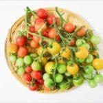 ミニトマトの色の違いは?黄・オレンジ・緑・黒・赤の栄養効果!